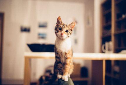 O pisica si o cauza sociala s-au intalnit si au facut un viral